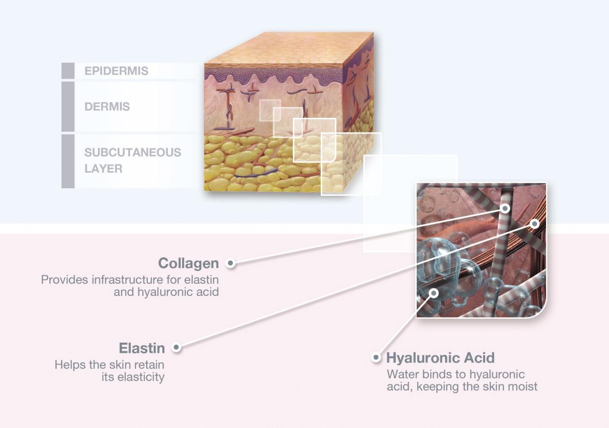 Skin incision collagen1 diagram art